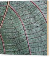 Grey Leaf With Purple Veins 2 Wood Print