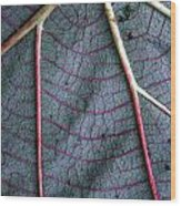 Grey Leaf With Purple Veins Wood Print