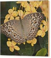Grey Pansy Butterfly Arizona Wood Print
