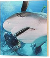 Grey Reef Shark Wood Print by Liudmila Di