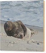 Grey Seal Pup On Beach Wood Print