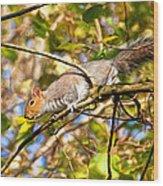 Grey Squirrel - Impressions Wood Print