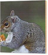 Grey Squirrel Tucking In Wood Print
