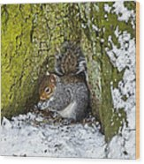 Grey Squirrel With Its Food Store Wood Print