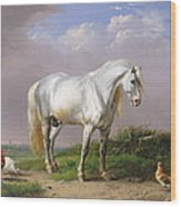 Grey Stallion Wood Print