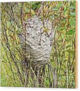 Grey Wasps Nest In Willow Bush Wood Print
