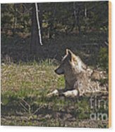 Grey Wolf   #3273-signed Wood Print
