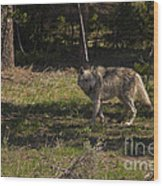 Grey Wolf   #3315 Wood Print