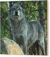 North American Wolf  Wood Print