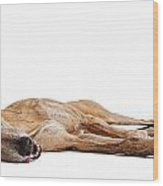 Greyhound Dog Laying Down Wood Print by Susan Schmitz
