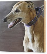 Greyhound Dog Wood Print