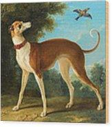 Greyhound In A Landscape Wood Print