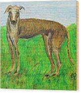 Greyhound Posing Wood Print