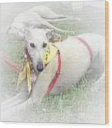 Greyhound Rescue 7 Wood Print