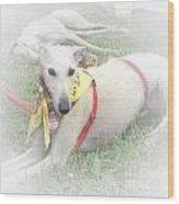 Greyhound Rescue 7 Wood Print by Jackie Bodnar