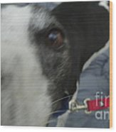 Greyhound Rescue 9 Wood Print