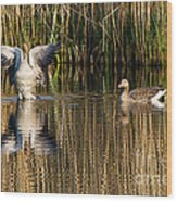 Greylag Goose Family Wood Print