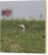 Greylag Goose Sticks Its Head Above The Dike Wood Print