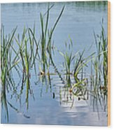 Greylake Reflections Wood Print