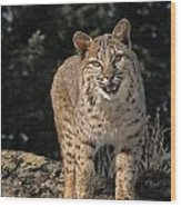 G&r.grambo Mm-00006-00275, Bobcat On Wood Print