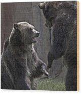 Grizzlies At Play Wood Print