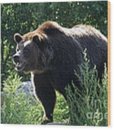 Grizzly-7756 Wood Print