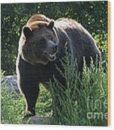Grizzly-7759 Wood Print