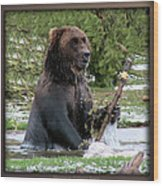 Grizzly Bear 08 Wood Print