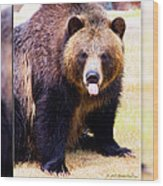 Grizzly Bear 2 Wood Print