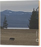 Grizzly Bear  #5270 Wood Print
