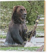 Grizzly Bear 6 Wood Print
