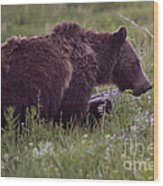 Grizzly Bear  #6192 Wood Print