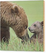 Grizzly Bear And Cub in Katmai Wood Print