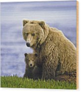 Grizzly Bear And Cub Wood Print