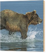 Grizzly Bear Chasing Fish Wood Print