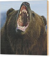 Grizzly Bear Close Up Of Growling Face Wood Print