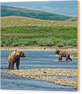 Grizzly Bear Communication In The Moraine River In Katmai  Np-ak Wood Print