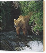 Grizzly Bear Fishing Brooks River Falls Wood Print