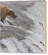 Grizzly Bear Fishing For Sockeye Salmon Wood Print