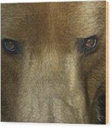 Grizzly Bear Portrait Wood Print