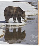 Grizzly Bear Reflected In Water Wood Print