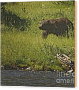 Grizzly Bear-signed-#1158 Wood Print