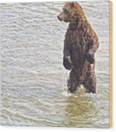Grizzly Bear Standing To Get A Better Look In The Moraine River In Katmai Wood Print