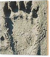 Grizzly Bear Track In Soft Mud. Wood Print
