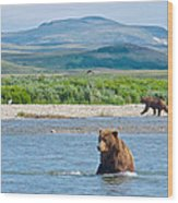 Grizzly Bears In Moraine River In Katmai National Preserve-ak Wood Print