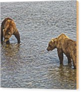 Grizzly Bears Looking For Salmon In Moraine River In Katmai Np-ak Wood Print
