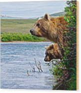 Grizzly Bears Peering Out Over Moraine River From Their Safe Island Wood Print