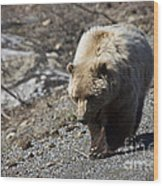 Grizzly By The Road Wood Print