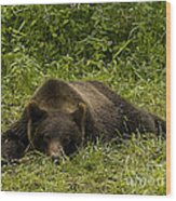 Grizzly Cub  #0863 Wood Print