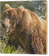 Grizzly On The River Bank Wood Print